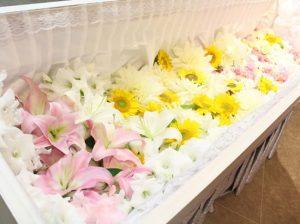 ファミリーホール港南台、花いっぱい火葬プラン209,000円